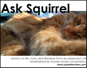 Ask Squirrel (800x425) (3)