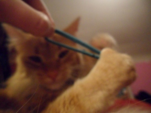 Hair elastics can make you go blurry. In a good way.