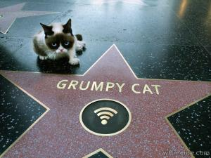 Grumpy Cat taking his fame for granted.