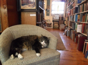 Independent bookstores are also often home to cats, like Fat here, at the Yankee Book & Art Gallery in Plymouth, MA.